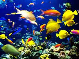 Coral_reef_life_Fish_wallpapers