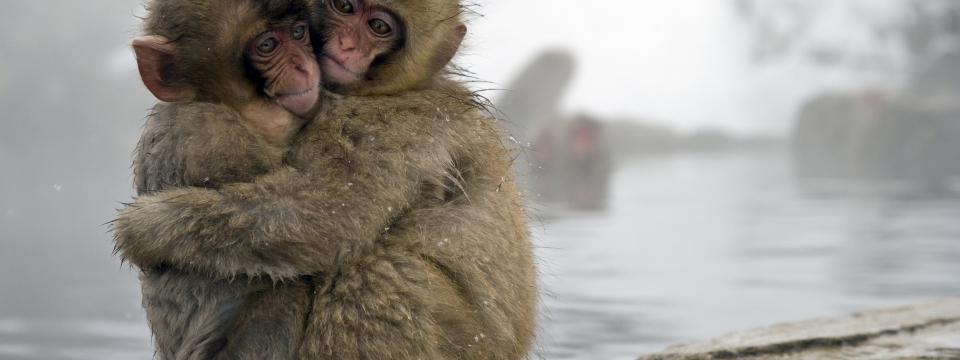 One-Life-Japanese-Macaque-Babies-Huddling-Together
