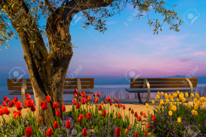 tree with tulip flowers and two seat benches before lake at sunset