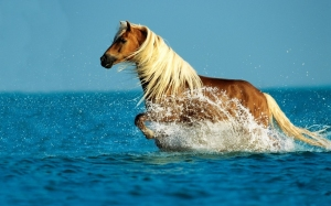 Horse-in-the-sea-1024x640