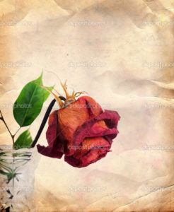 Vintage background with dried red rose in vase